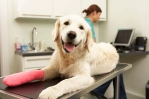 Veterinary Equipment Financing